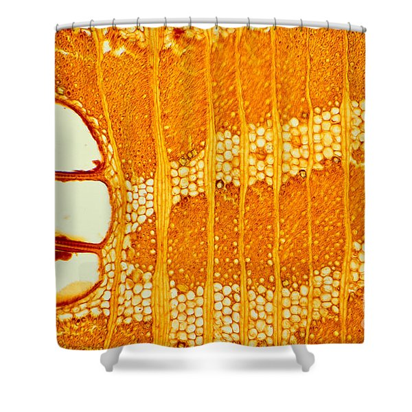 Jamaican Dogwood Vessels And Fibers Shower Curtain