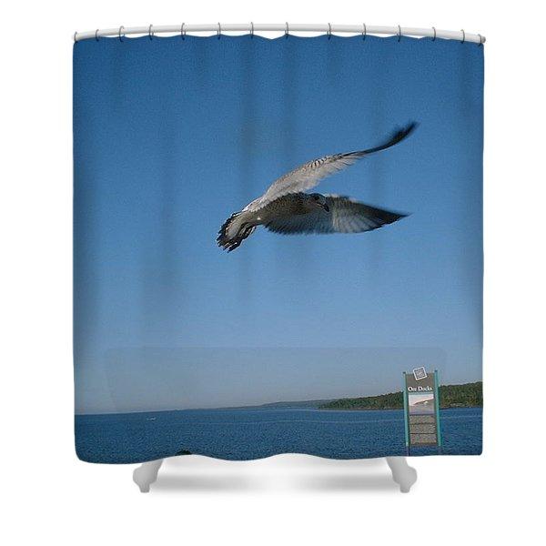 Jonathan Seagull Shower Curtain