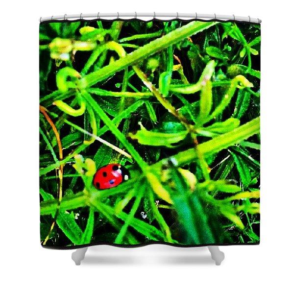 Ladybird Shower Curtain