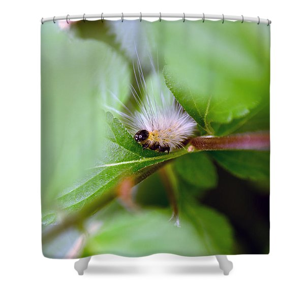 Leaf For One Shower Curtain