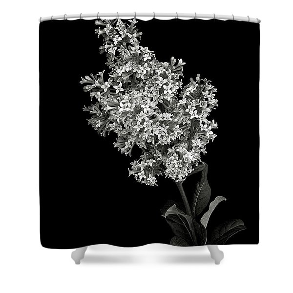 Lilac In Black And White Shower Curtain