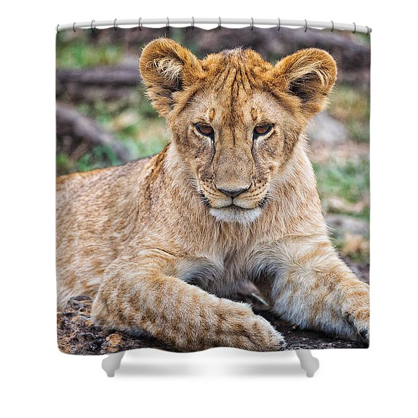 Shower Curtain featuring the photograph Lion Cub by Perla Copernik