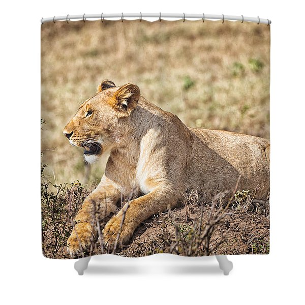 Shower Curtain featuring the photograph Lioness Relaxing by Perla Copernik