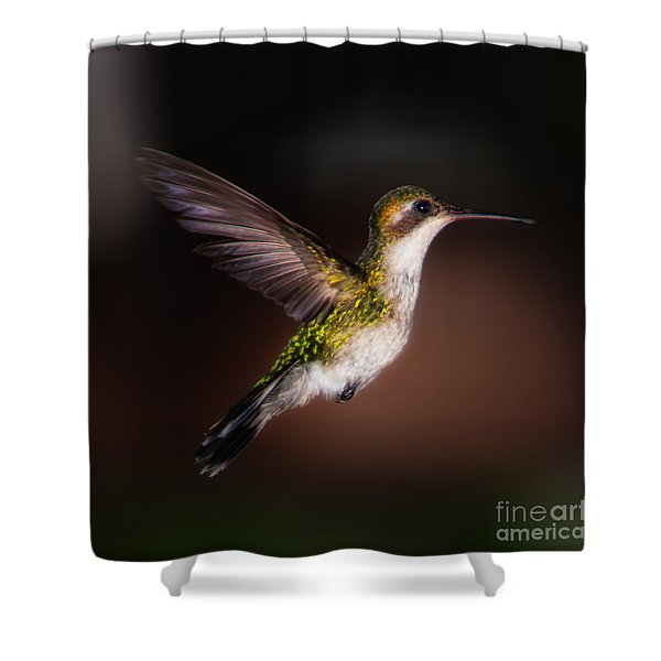 Lone Hummingbird Shower Curtain