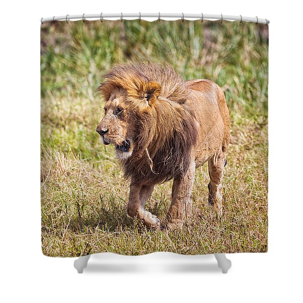 Shower Curtain featuring the photograph Looking For A Partner by Perla Copernik