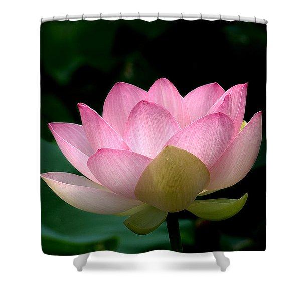 Lotus Beauty--blushing Dl003 Shower Curtain