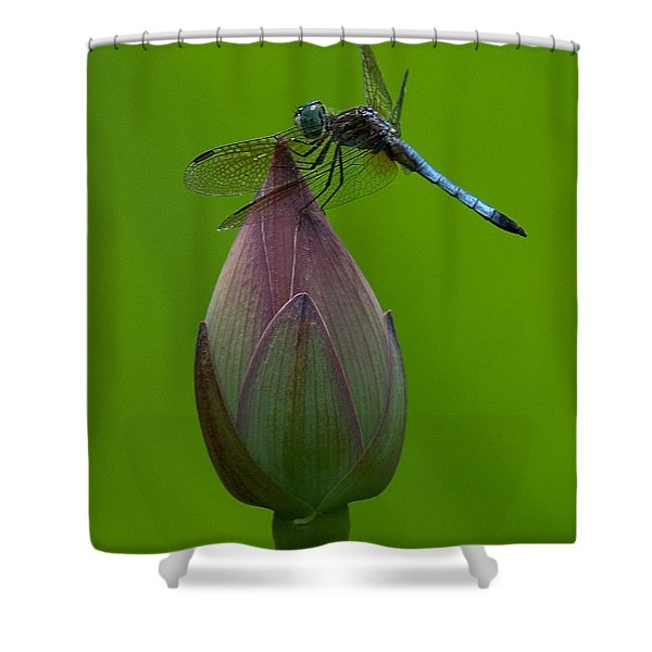 Lotus Bud And Blue Dasher Dragonfly Dl007 Shower Curtain