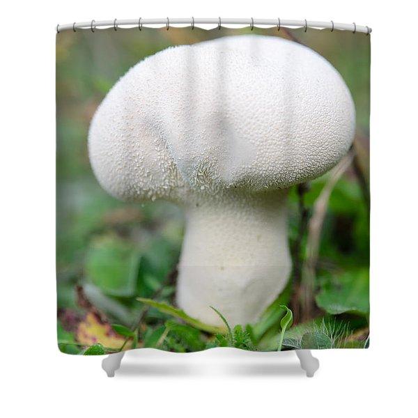Lycoperdon Shower Curtain