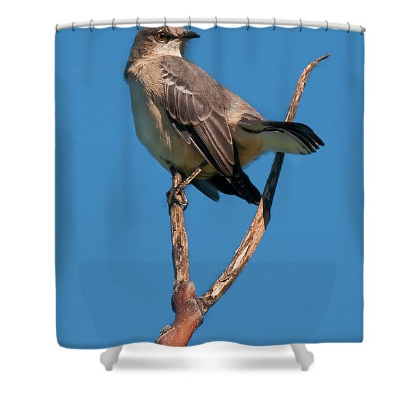Mock One Shower Curtain