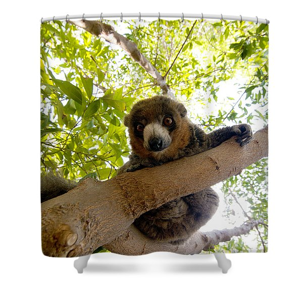 Mongoose Lemur Shower Curtain