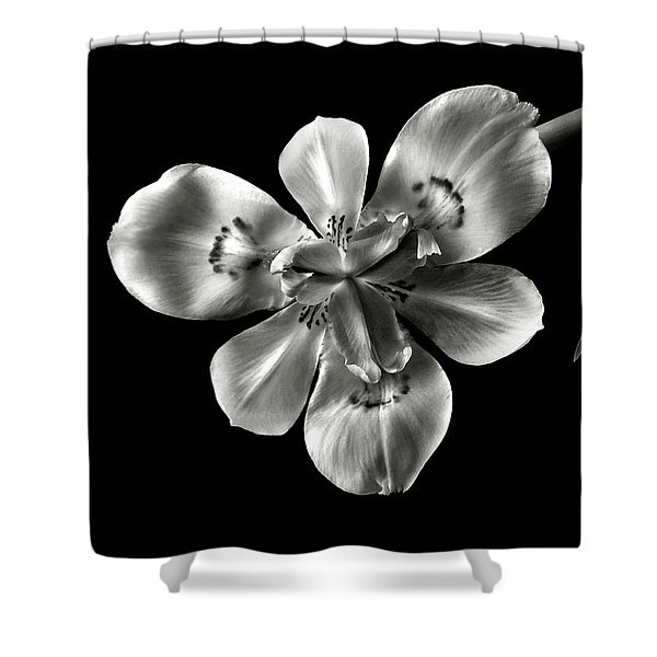Morea Lily In Black And White Shower Curtain