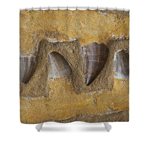 Mosasauras Teeth Shower Curtain