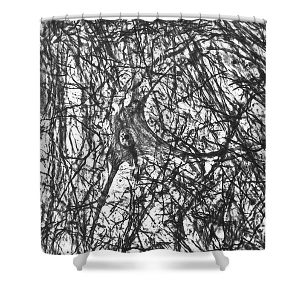 Motor Neuron Of Cat Shower Curtain
