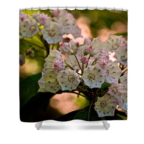 Mountain Laurel Flowers 2 Shower Curtain