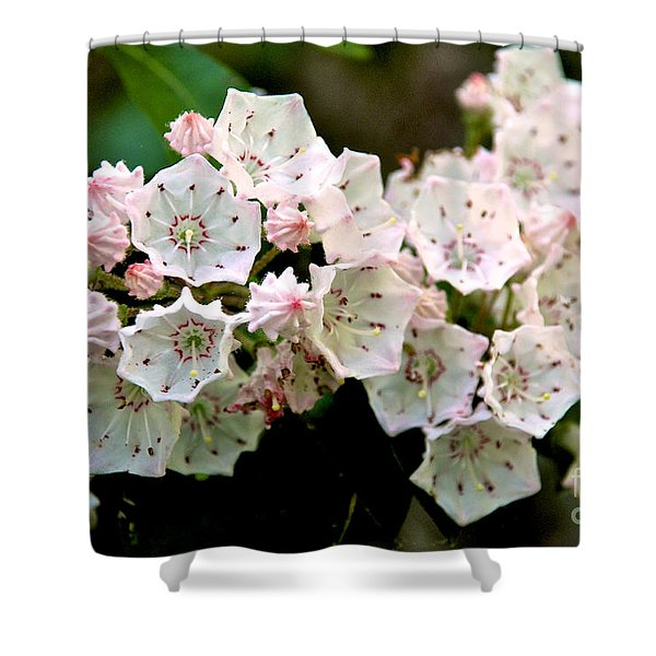 Mountain Laurel Flowers Shower Curtain
