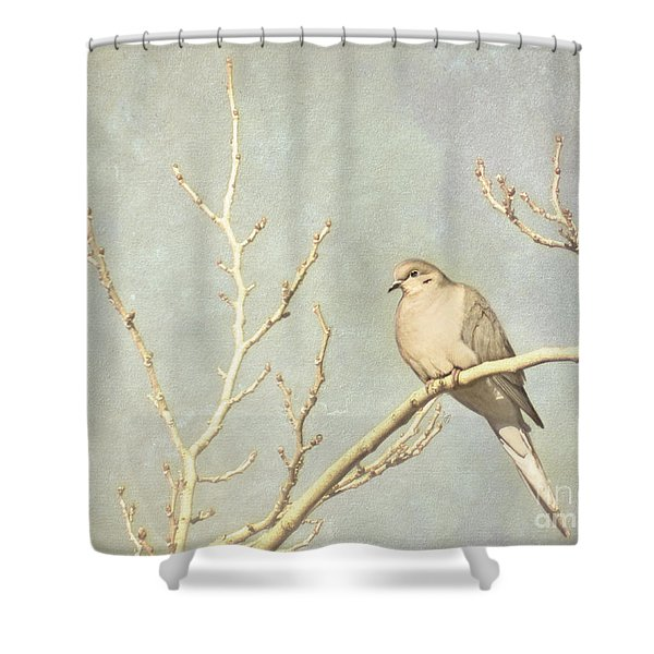 Mourning Dove In Winter Shower Curtain
