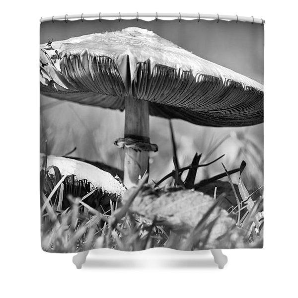 Mushroom In Black And White Shower Curtain