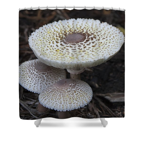 Mushroom Trio Squared Shower Curtain