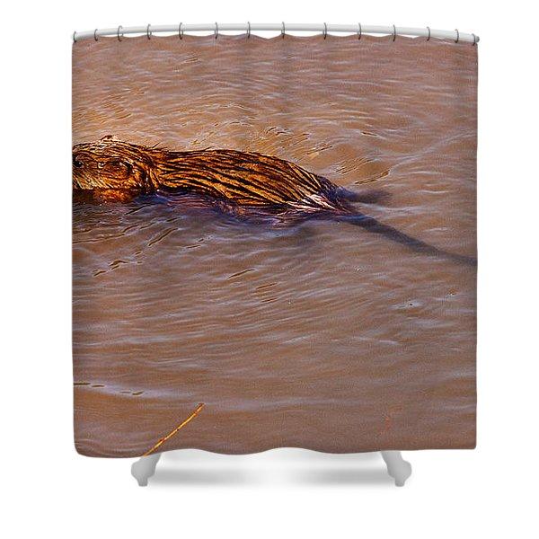 Muskrat Swiming Shower Curtain