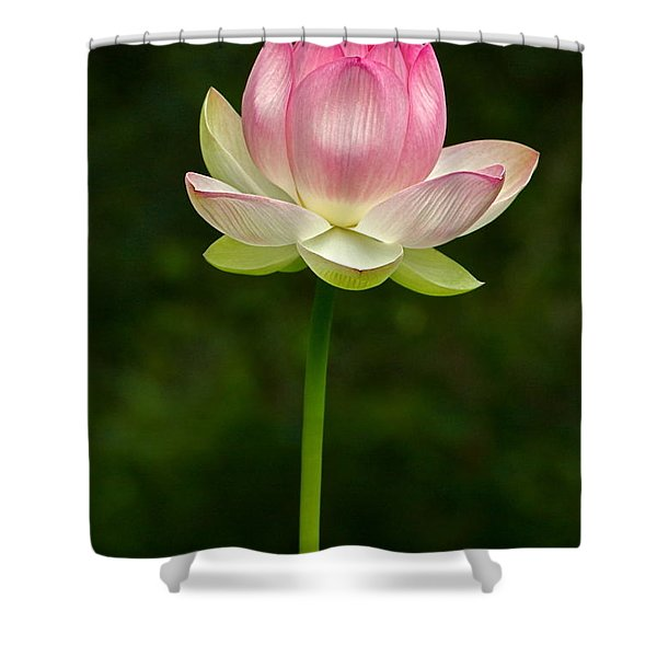 No Less Magical Shower Curtain