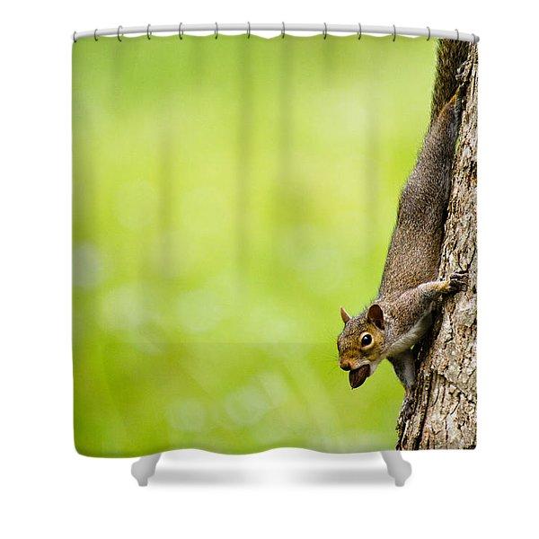 Nut Job Shower Curtain