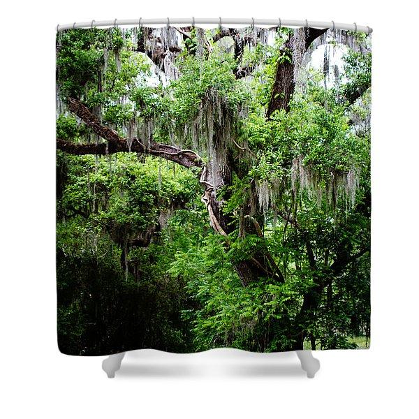 Oak And Moss Shower Curtain
