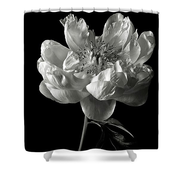 Open Peony In Black And White Shower Curtain
