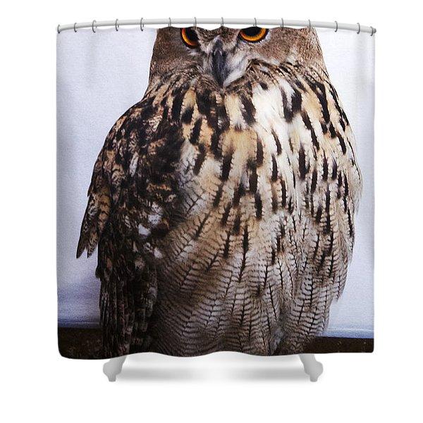 Orange Owl Eyes Shower Curtain