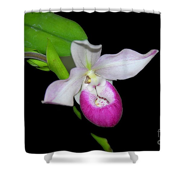 Orchid Slipper Shower Curtain
