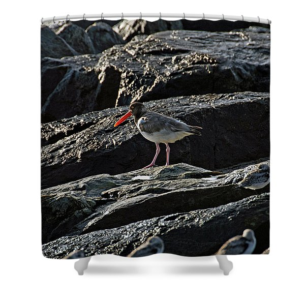 Oyster On The Rocks Shower Curtain
