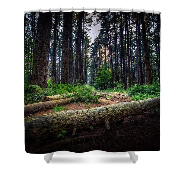 Path In The Pines Shower Curtain