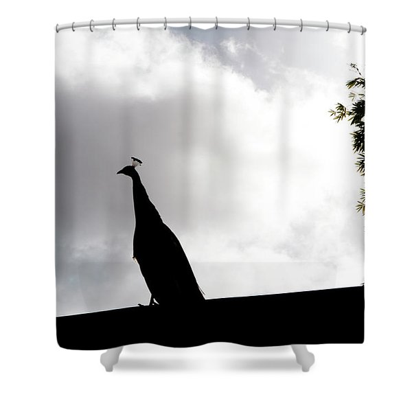Shower Curtain featuring the photograph Peacock Sentry by Lorraine Devon Wilke