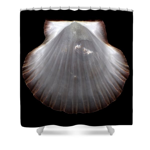 Pearlescent Shell  Shower Curtain