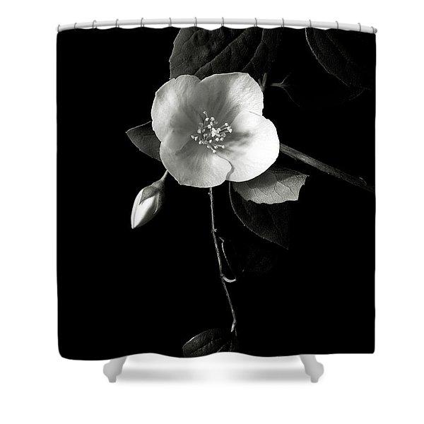 Philadelphus In Black And White Shower Curtain