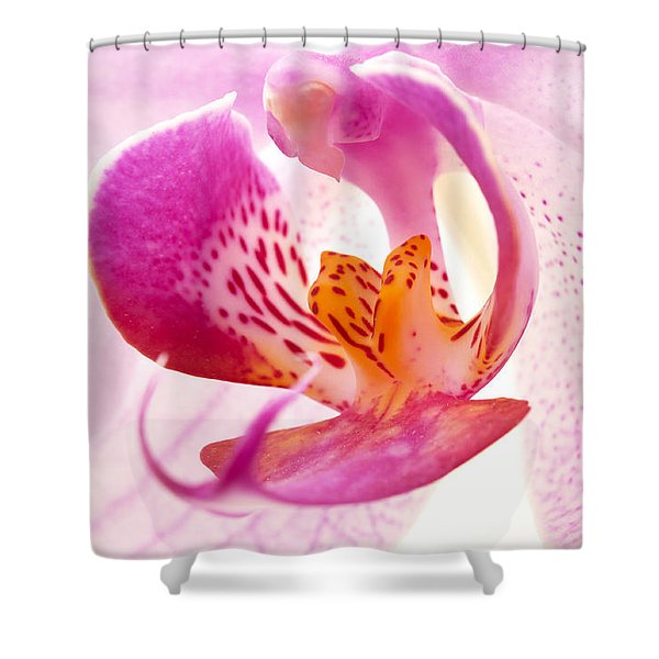 Shower Curtain featuring the photograph Pink Phalaenopsis by Fabrizio Troiani