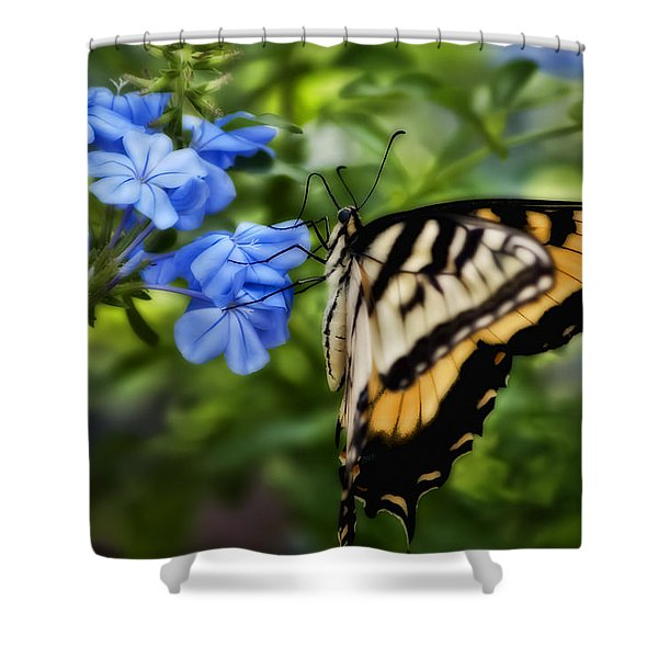 Plumbago And Swallowtail Shower Curtain