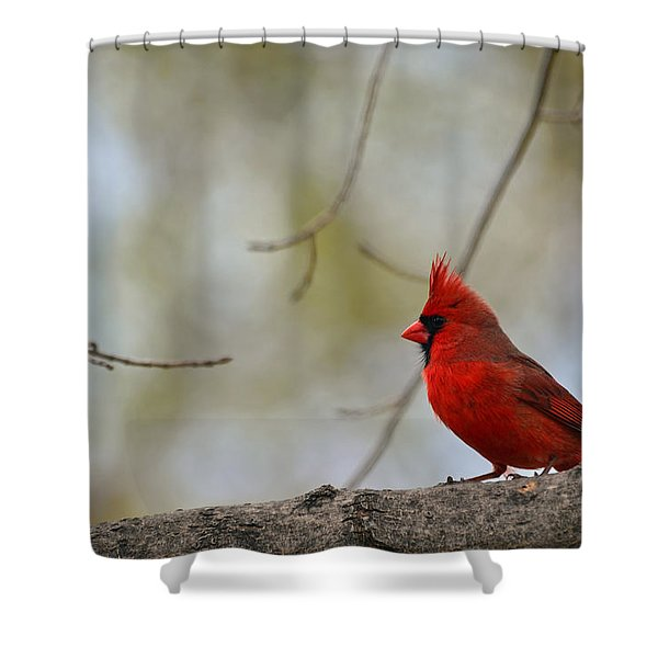 Pop Of Color Shower Curtain