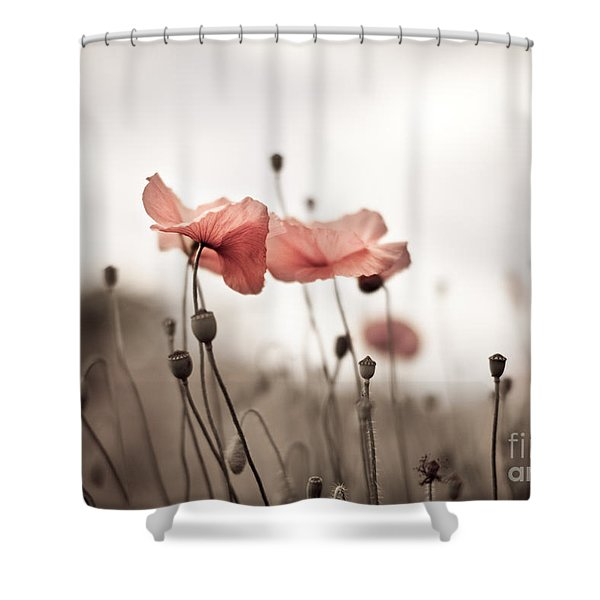 Poppy Flowers 03 Shower Curtain