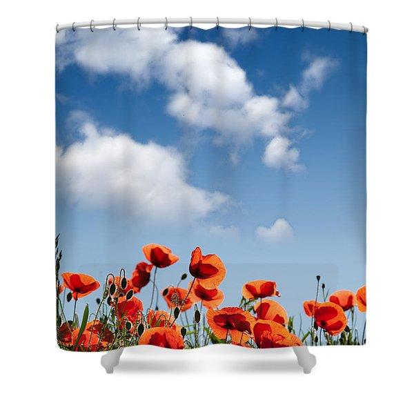Poppy Flowers 04 Shower Curtain