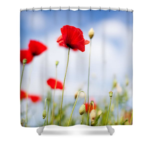 Poppy Flowers 06 Shower Curtain