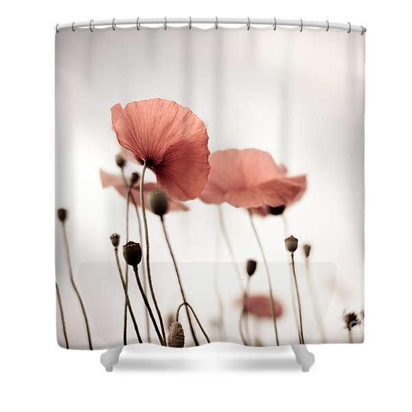Poppy Flowers 16 Shower Curtain