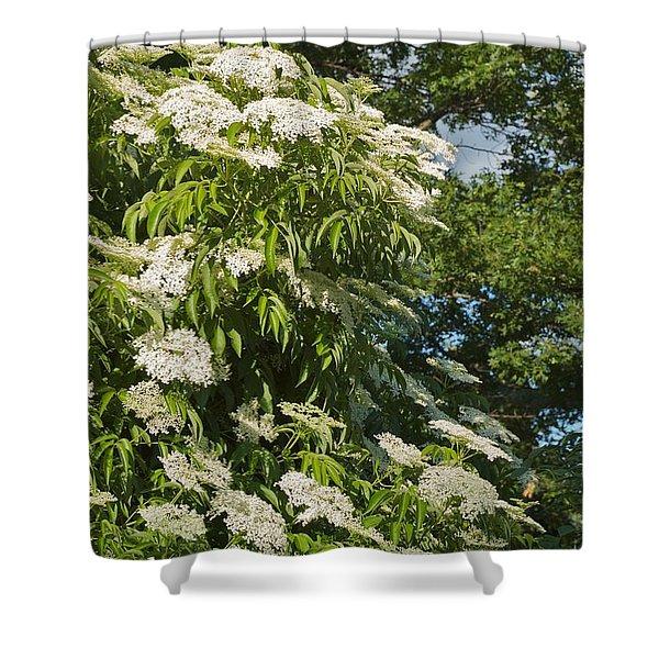 Potchen's Cascade Shower Curtain