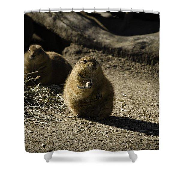Prairie Dog Sees The Shadow Shower Curtain