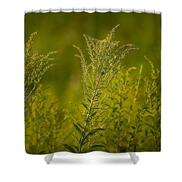 Prairie Goldenrod Shower Curtain