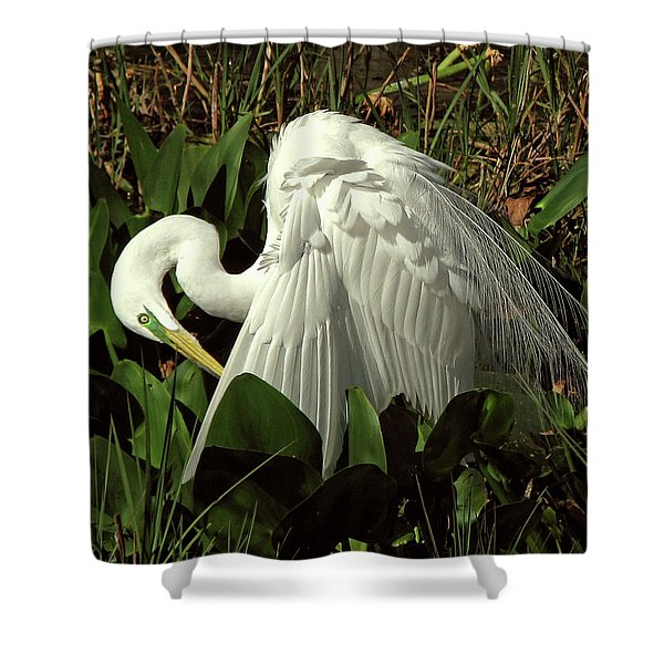 Preening Egret Shower Curtain