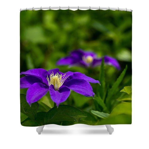 Purple Clematis Flower Shower Curtain