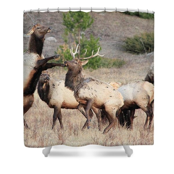 Put Up Your Dukes Shower Curtain
