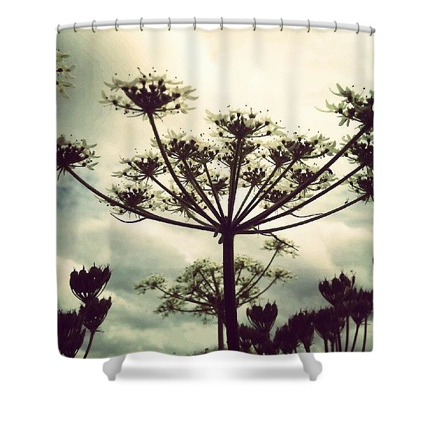 Queen Annes Lace Flowers Shower Curtain