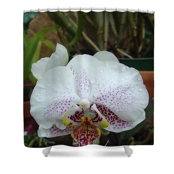 Rain Drops On Orchid Shower Curtain