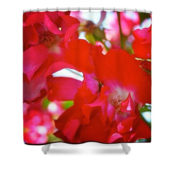 #red #climbing_roses #flowers #roses Shower Curtain